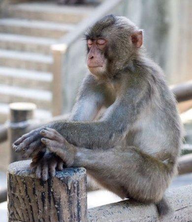 Медитирующие животные