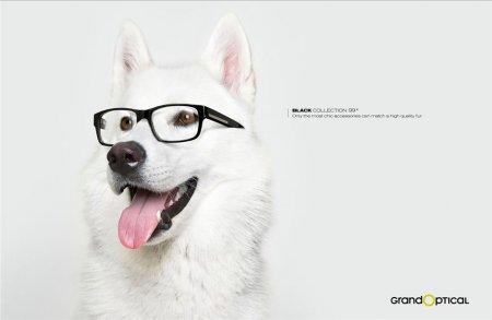 "Собаки в рекламе ""Grand Optical: Black Collection"""