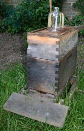 Как пчёлы делают мёд в банке