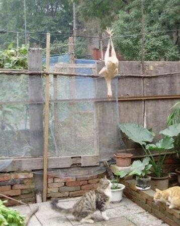 Как достать курицу?
