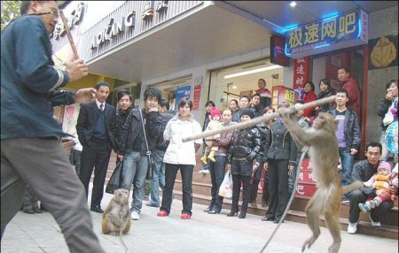 Кунг-Фу обезьянка