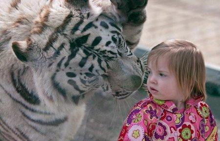 Девочка и тигр
