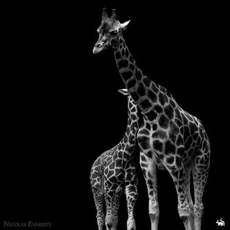 Животные от Nicolas Evariste