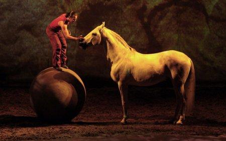 Лошади на работе и на отдыхе