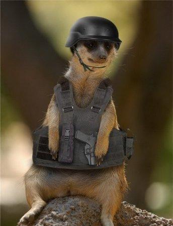 Photoshop как средство защиты животных