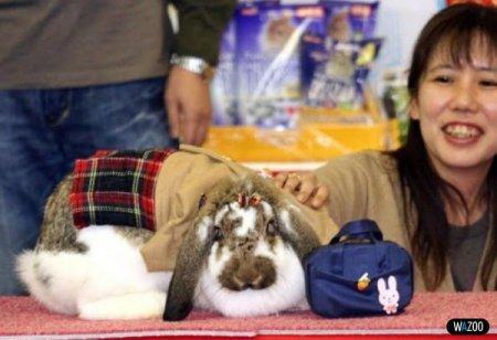 Гламурные кролики