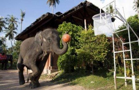Слоны готовятся в NBA