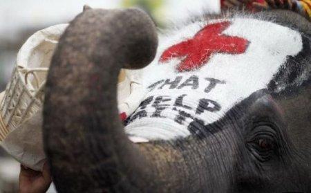 Слон собирает пожертвования