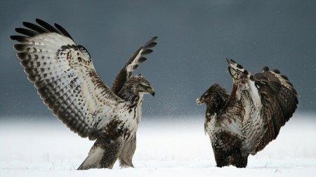 Птичье кунг-фу