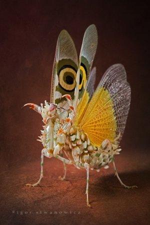 Животные от Igor Siwanowicz