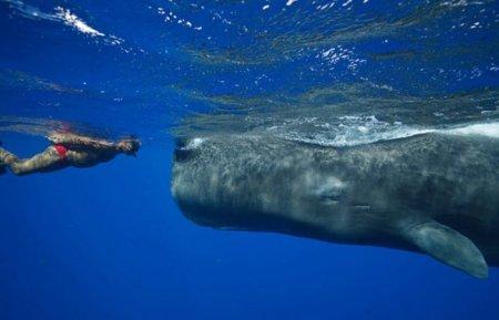 Заклинатель китов
