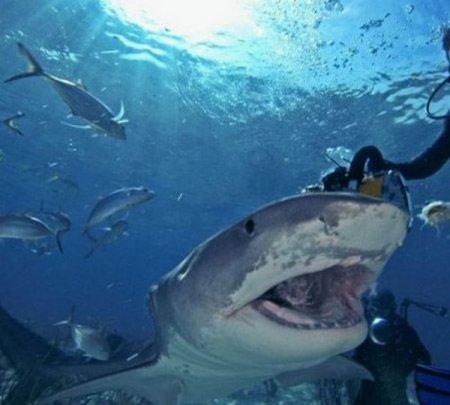 Рискованное развлечение с акулами