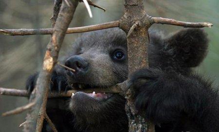 Маленькие медвежата
