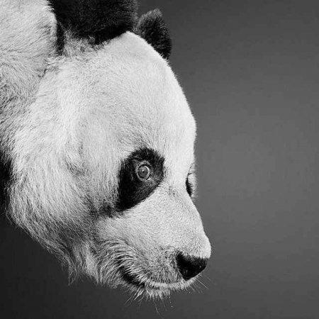 Рисунки животных от Paul Lung