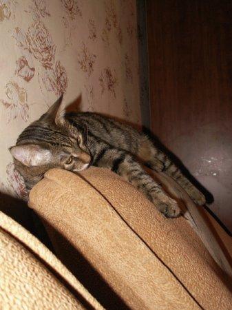 Котик отдыхает
