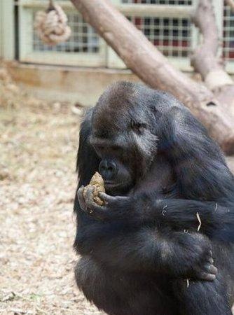 Очень голодная обезьяна