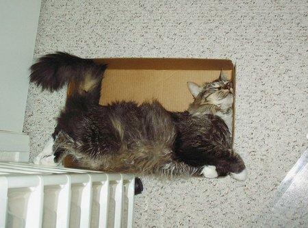 Сладкий сон в коробке