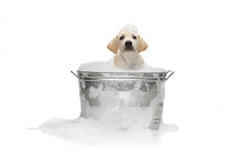Как моются собаки