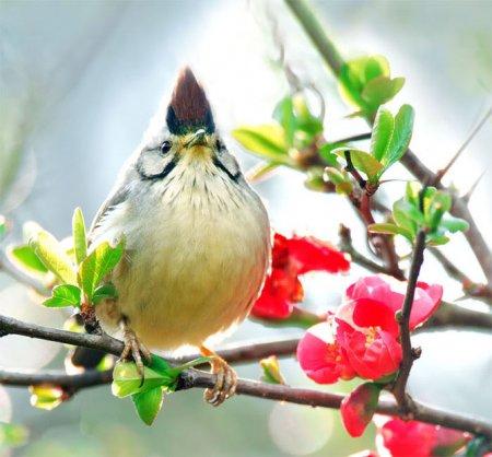 Весенние птички от John Soong