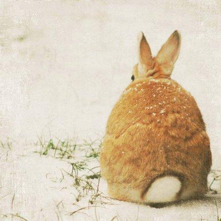 Забавные кролики