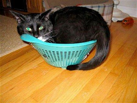 Любимые места кошек
