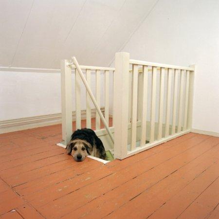 Собачья жизнь Maarten Wetsema