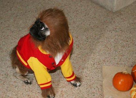 Костюм обезьянки