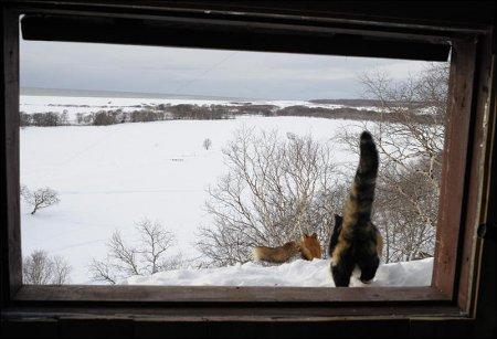 Храбрая кошка