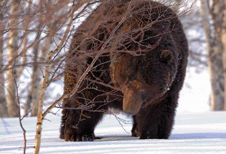 Медведи проснулись