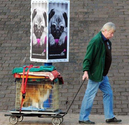 Собачий смотр Crufts-2010