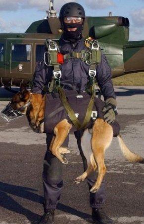 Собаки-парашютисты