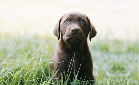 Собаки глазами Sharon Montrose