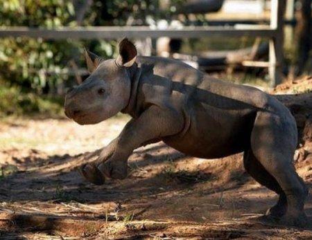 Маленький носорожек