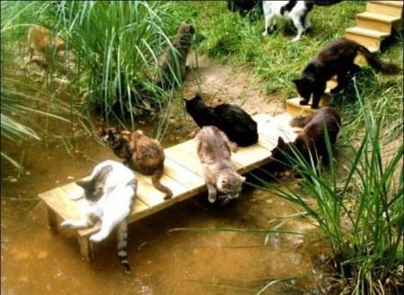 Рай для кошек