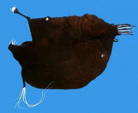 Рыбы, найденные у берегов Гренландии