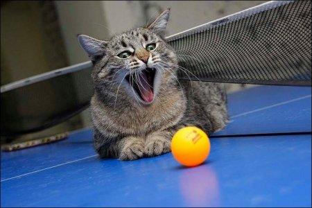 Кот-хищник