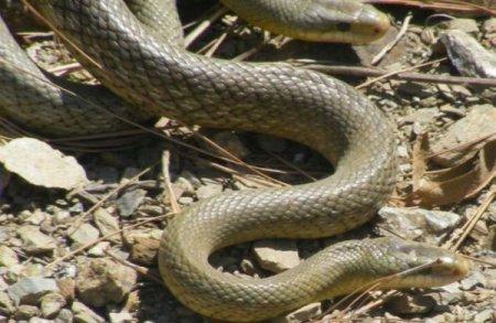 Змеиная любовь