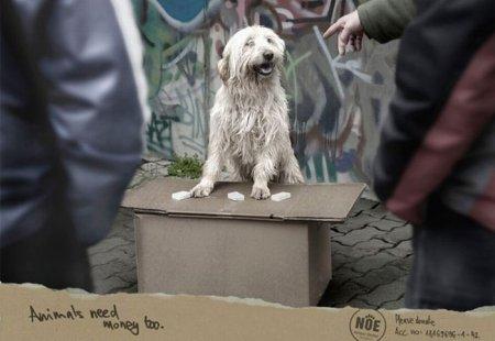 Креативная реклама с собаками