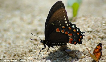Из гусеницы в бабочку!