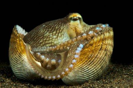 Nature's Best Photography: Морская природа 2010