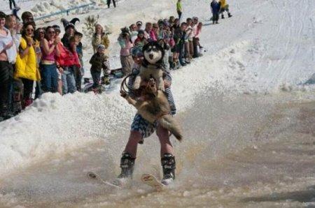 Собака прокатилась на лыжах