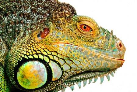 Портреты животных от Steve Hoskins