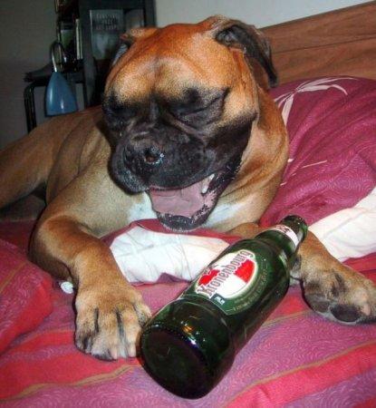 Собаки и пиво