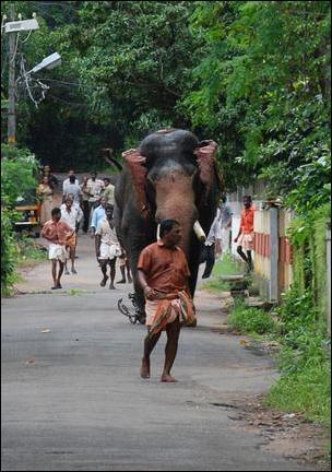 Взбесившийся слон