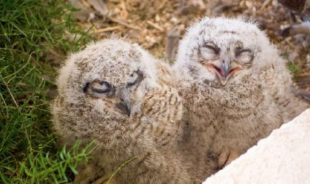 Улыбающиеся совы