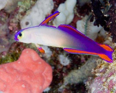 Разноцветный подводный мир