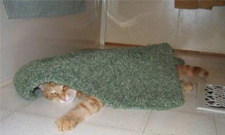 Ну ооочень расслабленный кот