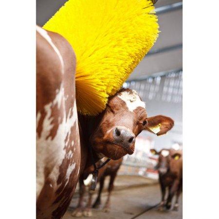 Автоматическая мойка для коров