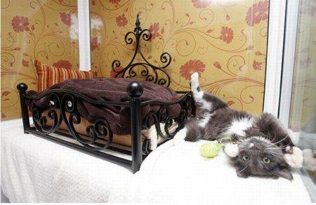 Люкс-гостиница для кошек