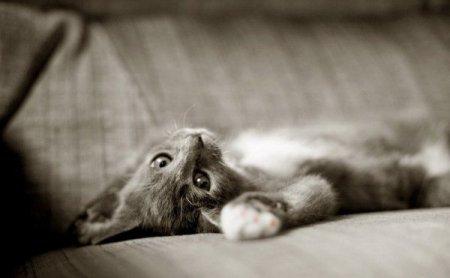 Котята от Leesa White